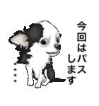 カスタムちわわ(個別スタンプ:35)