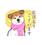 秋田犬の年末年始スタンプⅡ(個別スタンプ:13)
