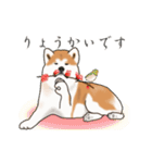 秋田犬の年末年始スタンプⅡ(個別スタンプ:15)
