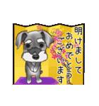 シュナウザー犬の年末年始スタンプⅡ(個別スタンプ:1)