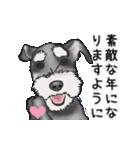 シュナウザー犬の年末年始スタンプⅡ(個別スタンプ:4)