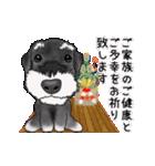 シュナウザー犬の年末年始スタンプⅡ(個別スタンプ:6)
