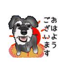 シュナウザー犬の年末年始スタンプⅡ(個別スタンプ:17)