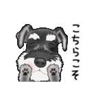 シュナウザー犬の年末年始スタンプⅡ(個別スタンプ:21)