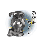 シュナウザー犬の年末年始スタンプⅡ(個別スタンプ:22)