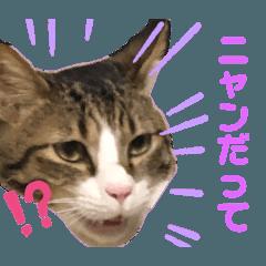 猫ふぁみりー