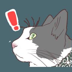 猫のみいさん。