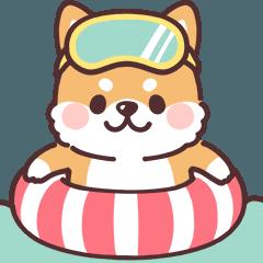 ころころ柴犬6 夏!