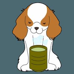 毎日キャバリア犬
