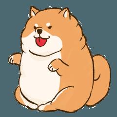 太めな柴犬