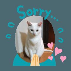 シロちゃんの挨拶