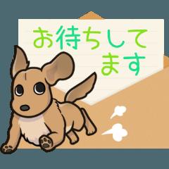 [LINEスタンプ] ダックス大好きスタンプ◆クリーム優し敬語