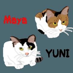[LINEスタンプ] ねこのYUNIとMaya (1)