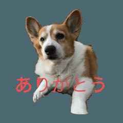 アル・日常編