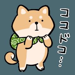 旅する柴犬