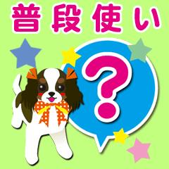 関西弁[キャバリア/赤褐色/黒/白]普段使い