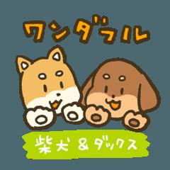 ワンダフル柴犬&ダックス