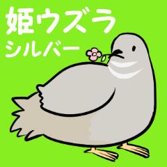 敬語のヒメウズラ・シルバー・鳥好きさんへ