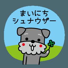まいにちシュナウザー LOVE & DOGS 6