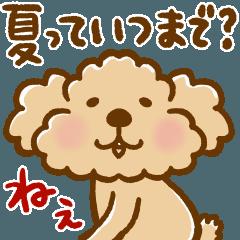 トイプーのぷう太郎 残暑〜秋編