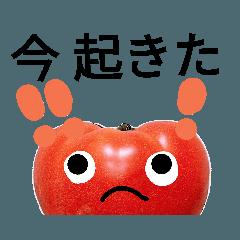 のんびりトマトさん