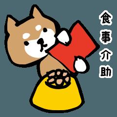 しば犬介護2