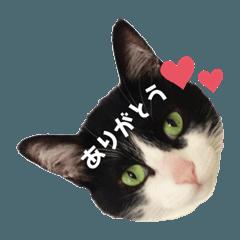 癒しのジョジョちゃん♡