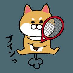 テニスやりたすぎる柴犬