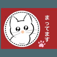 記号猫白猫ちゃん2