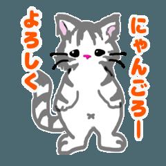 [LINEスタンプ] にゃんごろーの日常会話〜敬語〜 (1)