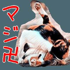 リアルネコスタンプ 03~驚き編~