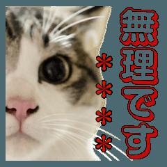 すずくんのカスタムスタンプ②(MyName向け)