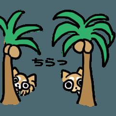 CUPU&CHURA(ちわわ)