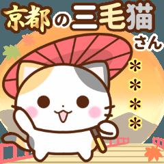 京都の三毛猫さん【カスタムスタンプ】