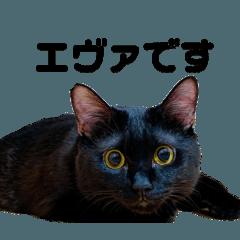 黒猫エヴァスタンプ改