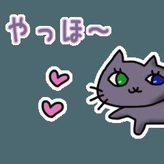 オッドアイの灰色猫