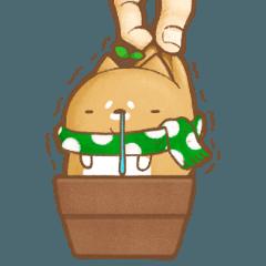 鉢植え犬はちー冬のリアクション鉢ー